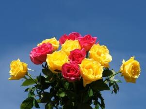 Enviar rosas y ramos de rosas - FloraQueen