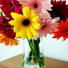 Image of Beautiful Gerberas