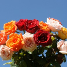 Image of Bouquet of roses assorted