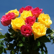 Image of Bouquet of yellow roses and pink