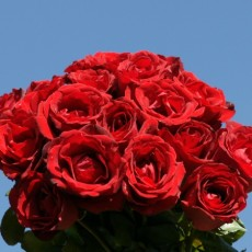 Image of Bouquet of Red Roses [imported]